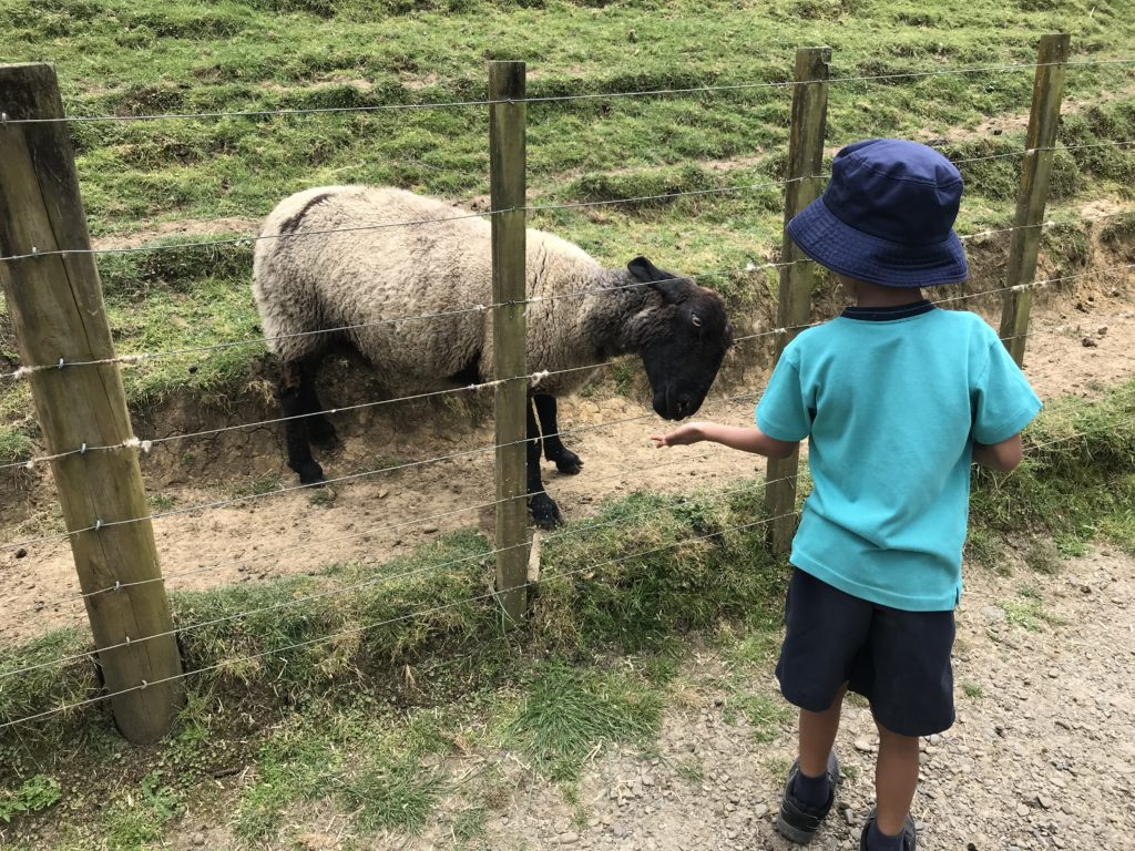 Feeding a sheep at Kiw Valley Farm Park